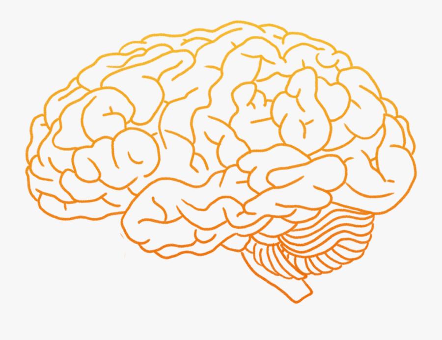 Human Brain Clip Art - Human Brain Brain Png, Transparent Clipart