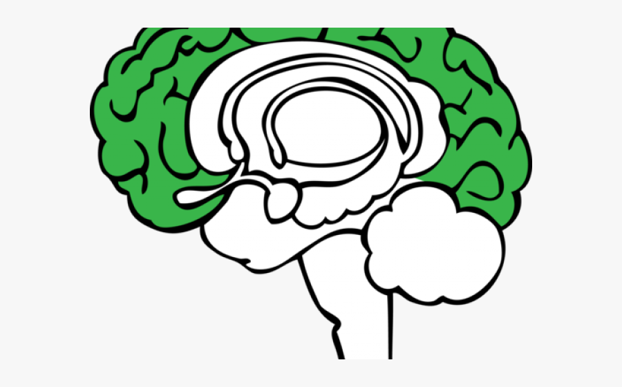 Brain Clipart Plant - Limbic System Without Labels, Transparent Clipart