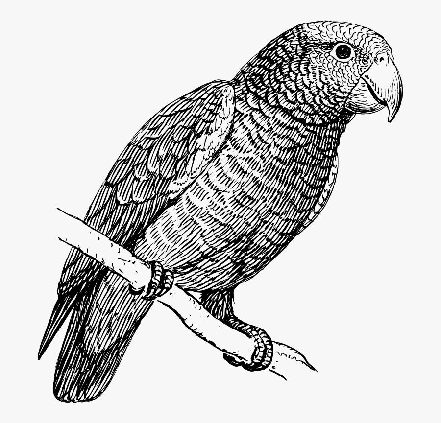 Parrot Clip Art Download - Parrot Png Black And White, Transparent Clipart
