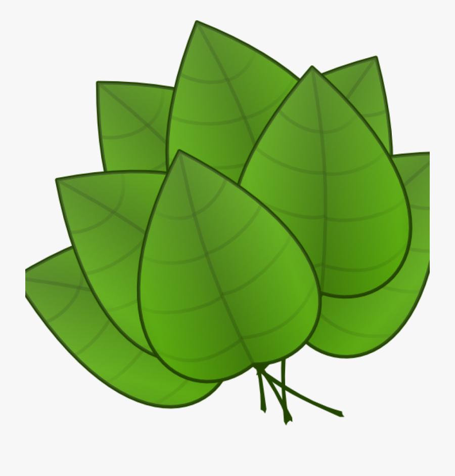 Jungle Leaves Clipart Jungle Leaves Clipart Free Jungle - Parts Of Plants Leaves, Transparent Clipart