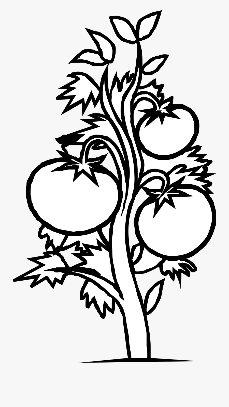 Dinner - Clipart - Black - And - White - Tomato Plant Coloring Page, Transparent Clipart