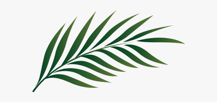 Palm Leaf Clipart Png, Transparent Clipart