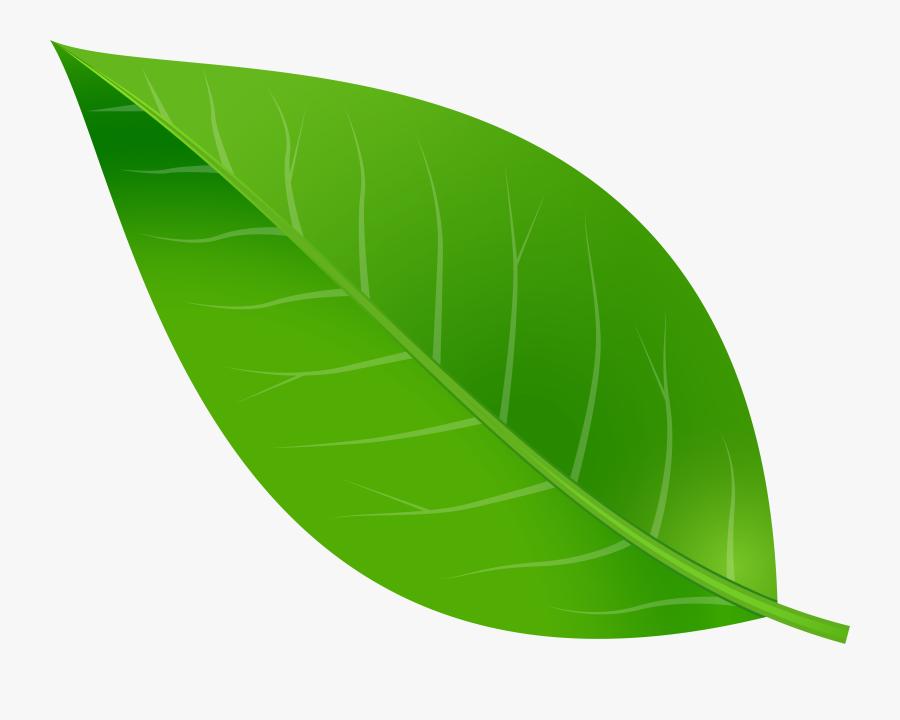 Spring Leaf Transparent Png Clip Art Image - Clipart Transparent Green Leaf, Transparent Clipart