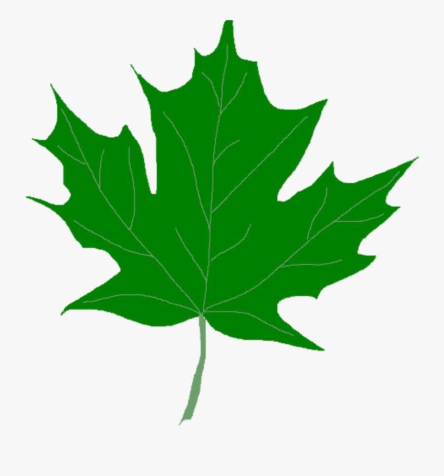Green Leaf Clipart Green Maple Leaves Clipart Clip - Clip Art Green Leaf, Transparent Clipart