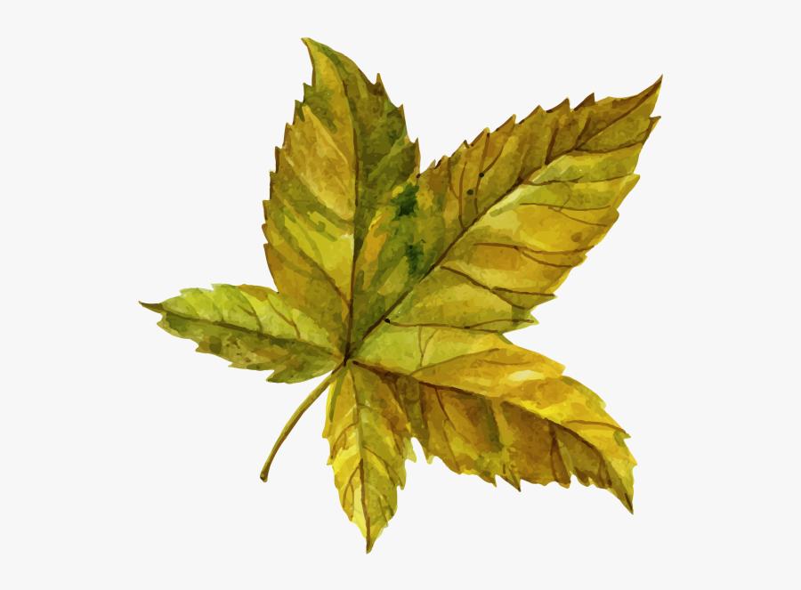Leaf Clipart Png Image Free Download Searchpng - Maple Leaf, Transparent Clipart