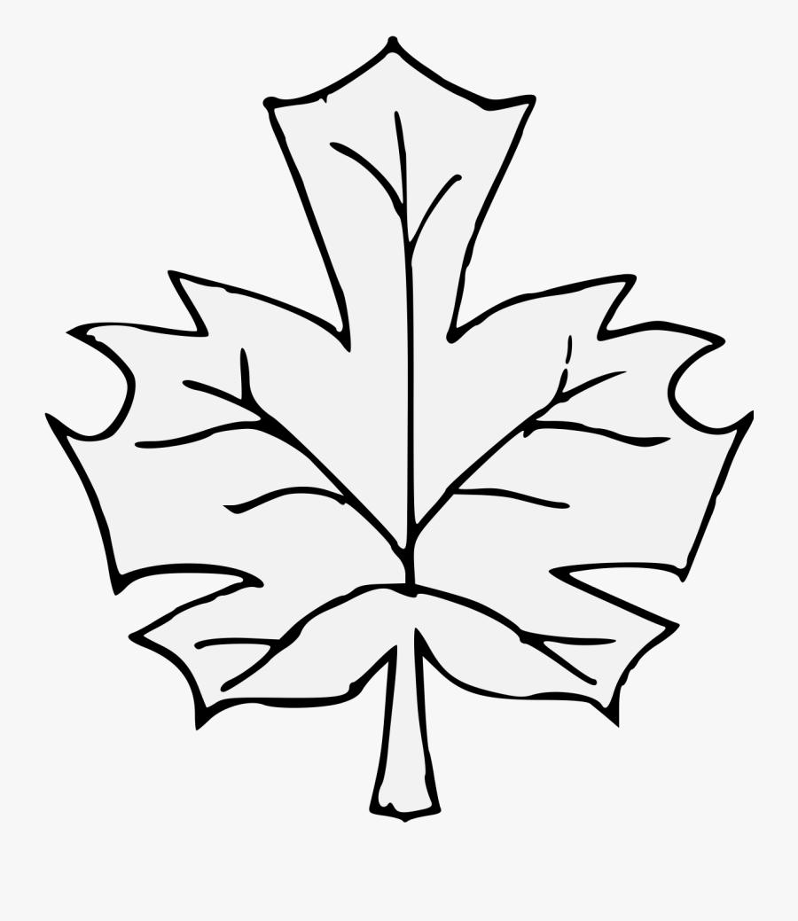 Leaf Clipart , Png Download - วาด รูป ระบายสี ใบไม้, Transparent Clipart