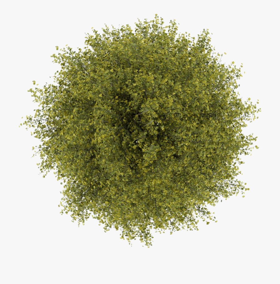 Trees Top View Png Clipart Transparent - Top View Tree Photoshop, Transparent Clipart