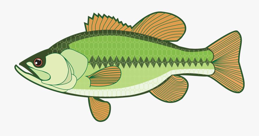 Transparent Crappie Clipart - Clipart Bass, Transparent Clipart