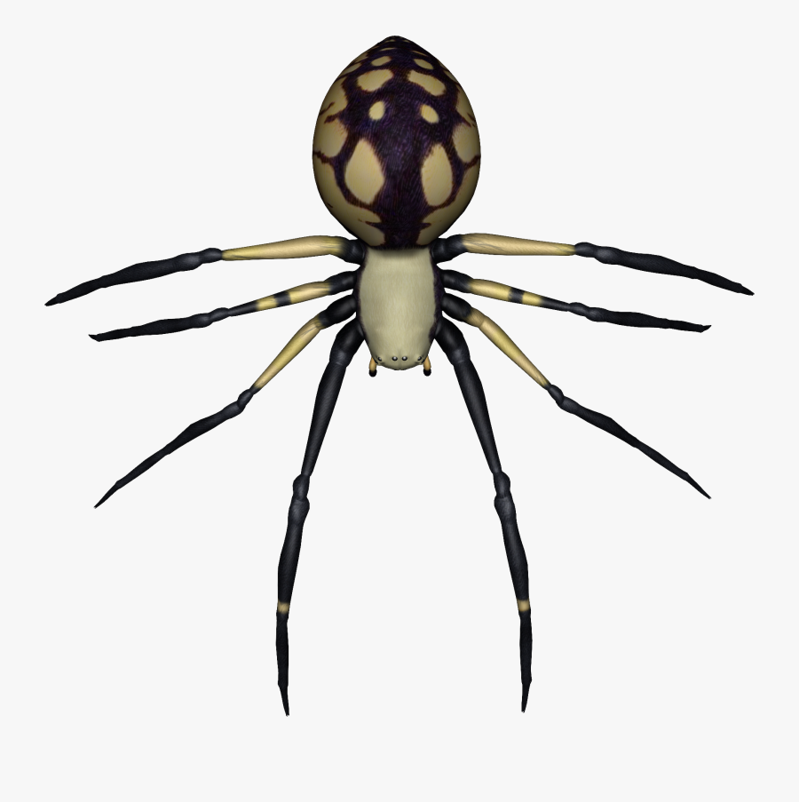Spider Png Images - Spider With Clear Background, Transparent Clipart