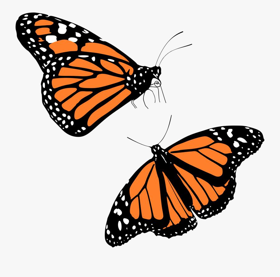 Monarch Butterflies - Transparent Background Monarch Butterfly Png, Transparent Clipart
