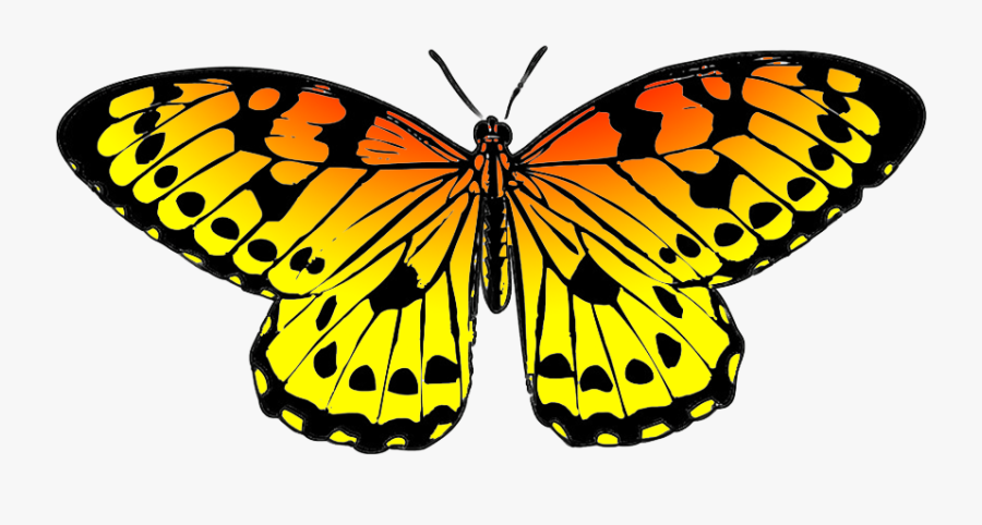 Black And Orange Drawing Of Butterfly - Yellow And Blue Butterflies, Transparent Clipart