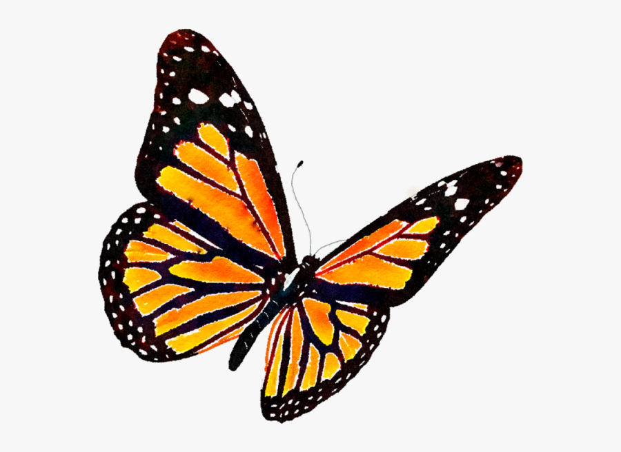 Monarch Butterfly Png - Monarch Butterfly Transparent Background, Transparent Clipart