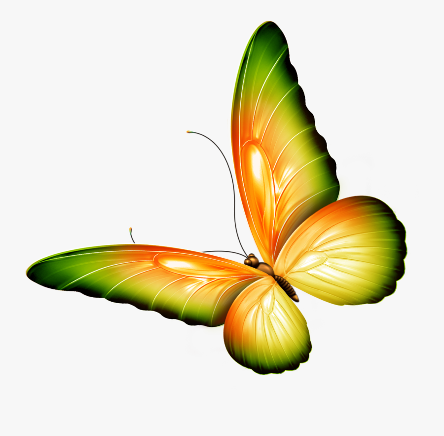 Clipart Flowers And Butterflies Border - Transparent Background Butterfly Clipart, Transparent Clipart