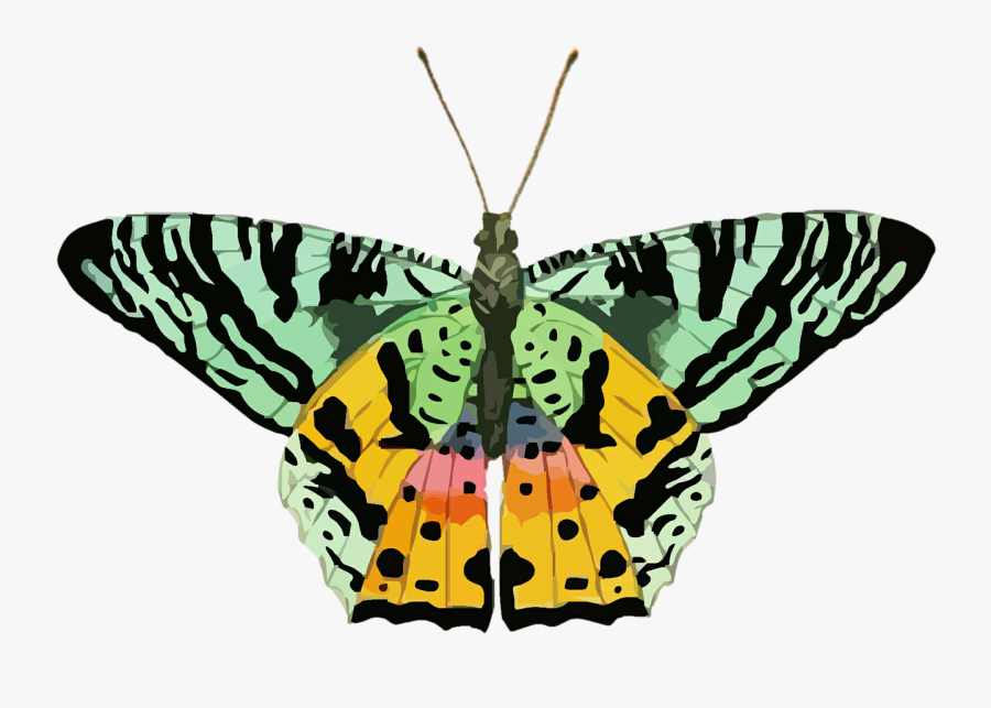 Butterfly, Clip Art, Colorful, Green, Yellow, Nature - Butterfly Green N Yellow, Transparent Clipart
