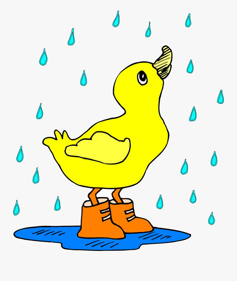 Clip Art Duck With Umbrella Clipart - Cartoon Duck In The Rain, Transparent Clipart