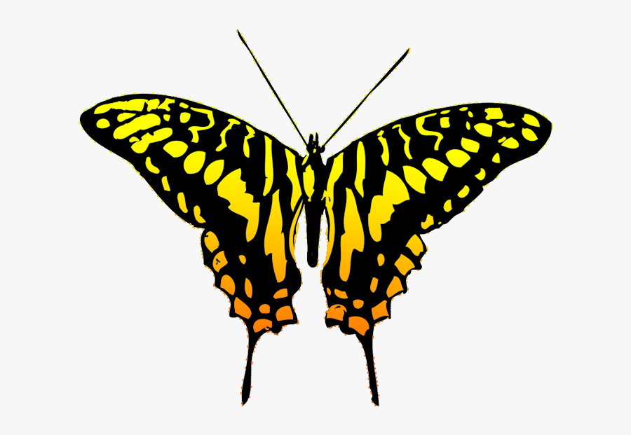 Black And Yellow Butterfly Clipart, Transparent Clipart