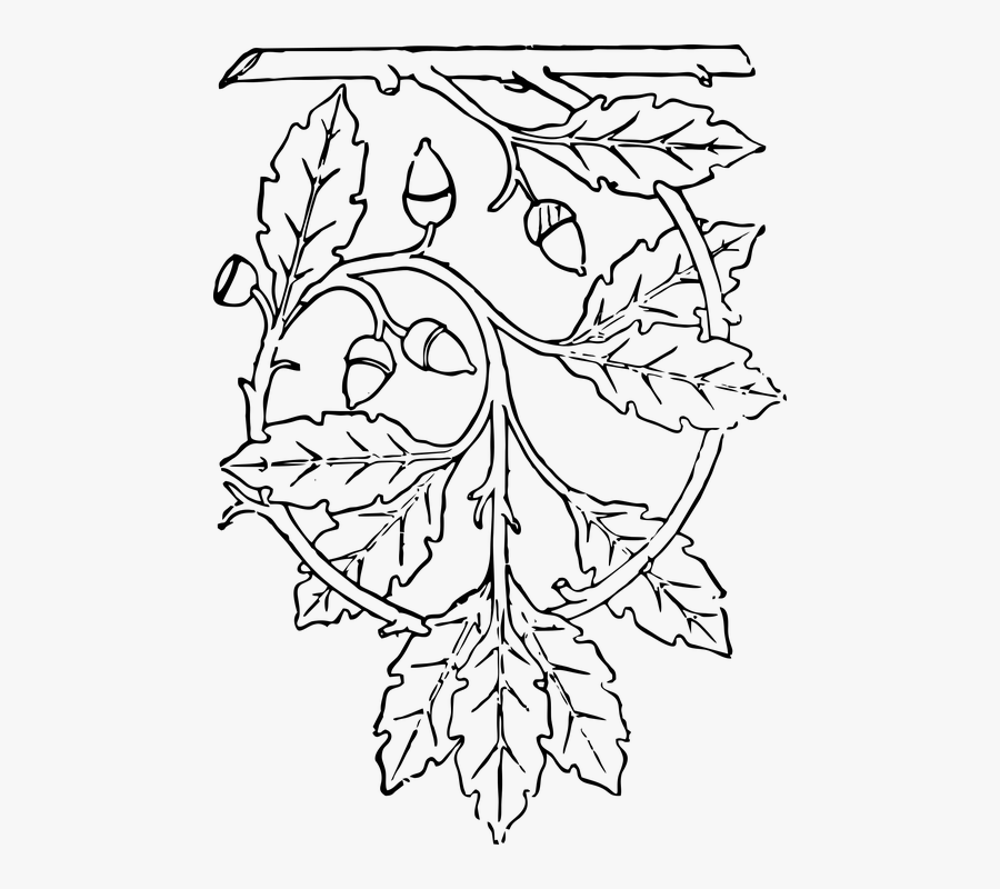 Transparent Live Oak Tree Clipart - Warrior Predator Weapon Predator Drawing, Transparent Clipart