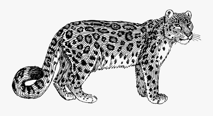 Wild Cat,carnivoran,ocelot - Cartoon Snow Leopard Drawing, Transparent Clipart