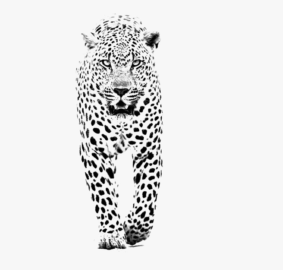 And Jaguar Panther Leopard Tiger Lion Black Clipart - Black And White Leopard Tattoo, Transparent Clipart