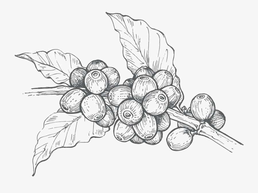 Grape,line Art,leaf,grapevine Family,plant,black And - Dibujos Para Colorear De Granos De Cafe, Transparent Clipart