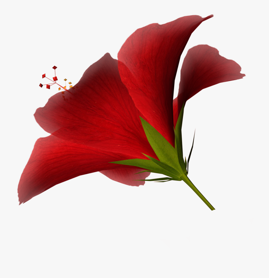 Free Free High Resolution Clipart, Download Free Clip - High Resolution Png Of Flower, Transparent Clipart
