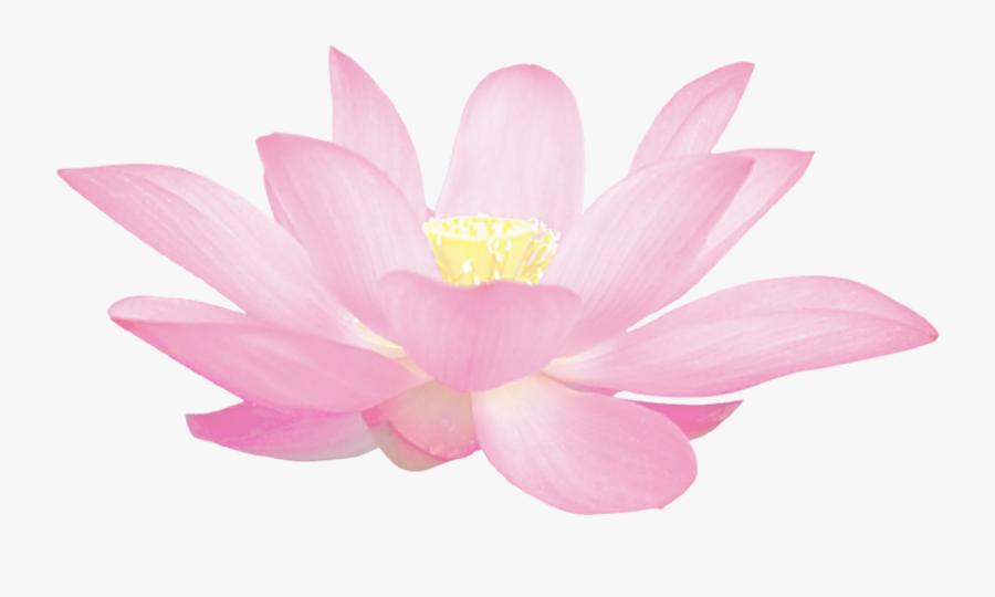 Clip Art Lotus Flower Pattern - 蓮花 Gif Transparent Background, Transparent Clipart