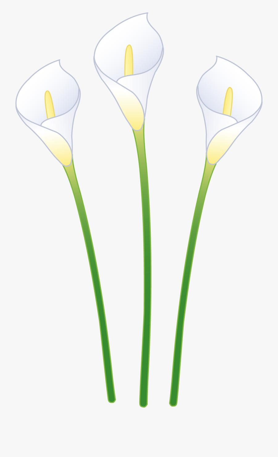 Three White Calla Lilies - Calla Lily Flowers Cartoon, Transparent Clipart