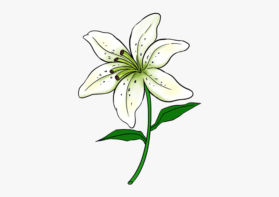 How To Draw A Lily Step By Step Drawing Tutorial Easy - Lily Flower Drawing Easy, Transparent Clipart
