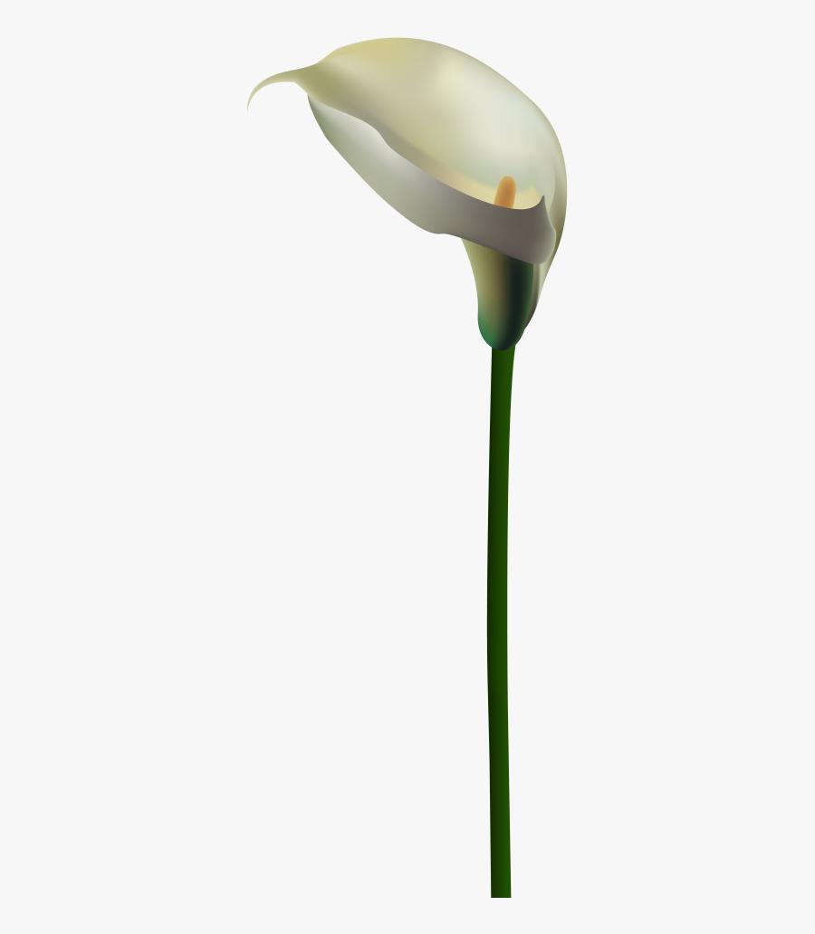 Calla Flower Png, Transparent Clipart