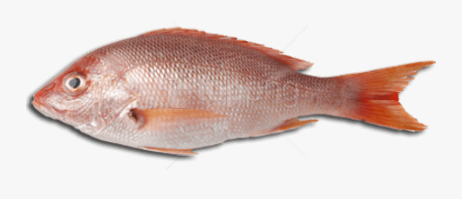 Collections At Sccpre Cat - Fish Images Of Meat, Transparent Clipart