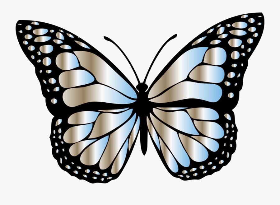 Butterfly,symmetry,moth - Different Colors Of Butterfly, Transparent Clipart