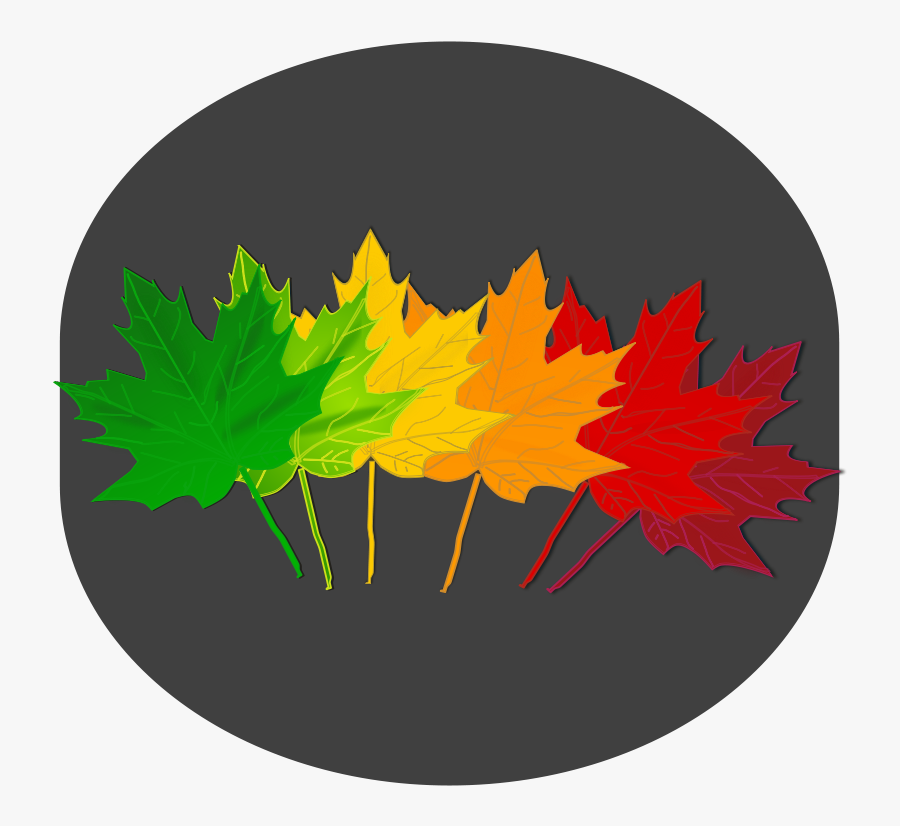 Tree,plant,leaf - Maple Leaf Shades, Transparent Clipart