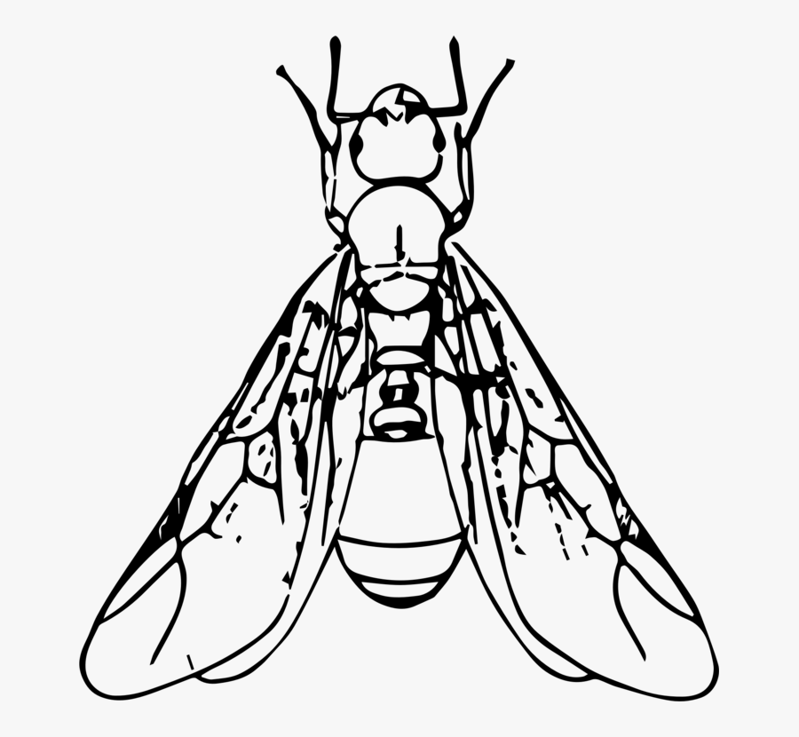 Line Art,organ,monochrome Photography - Ants With Wings Clipart, Transparent Clipart