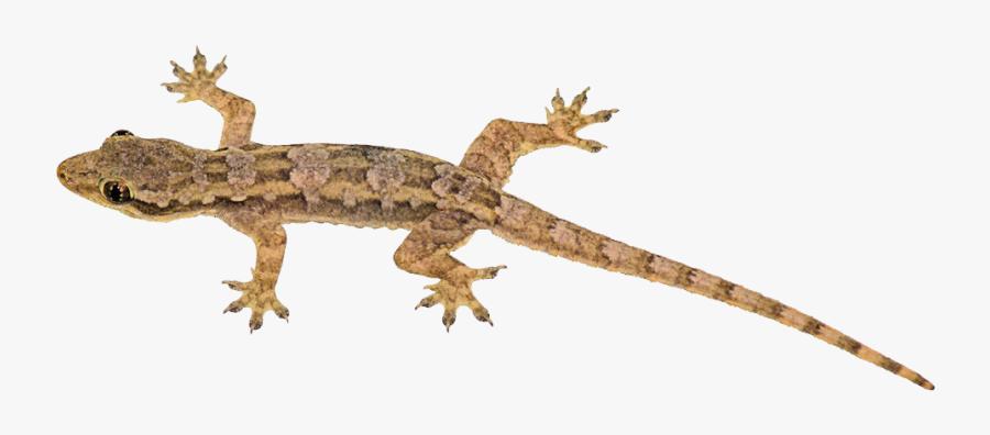 Chameleon Bearded Dragon Iguana, Transparent Clipart