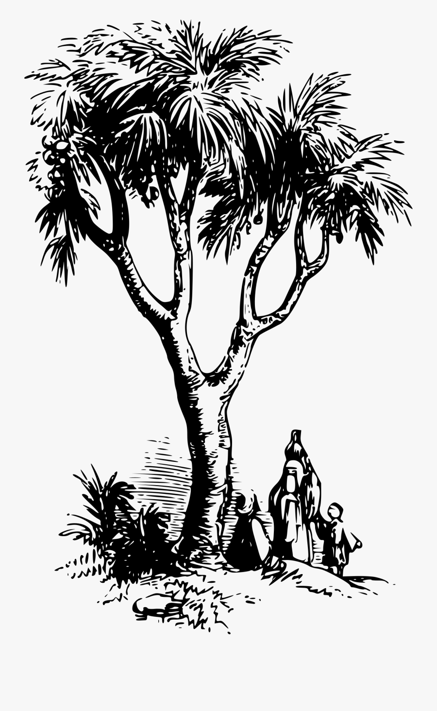 Visual Arts,plant,flower - Doum Palm Tree Drawing, Transparent Clipart