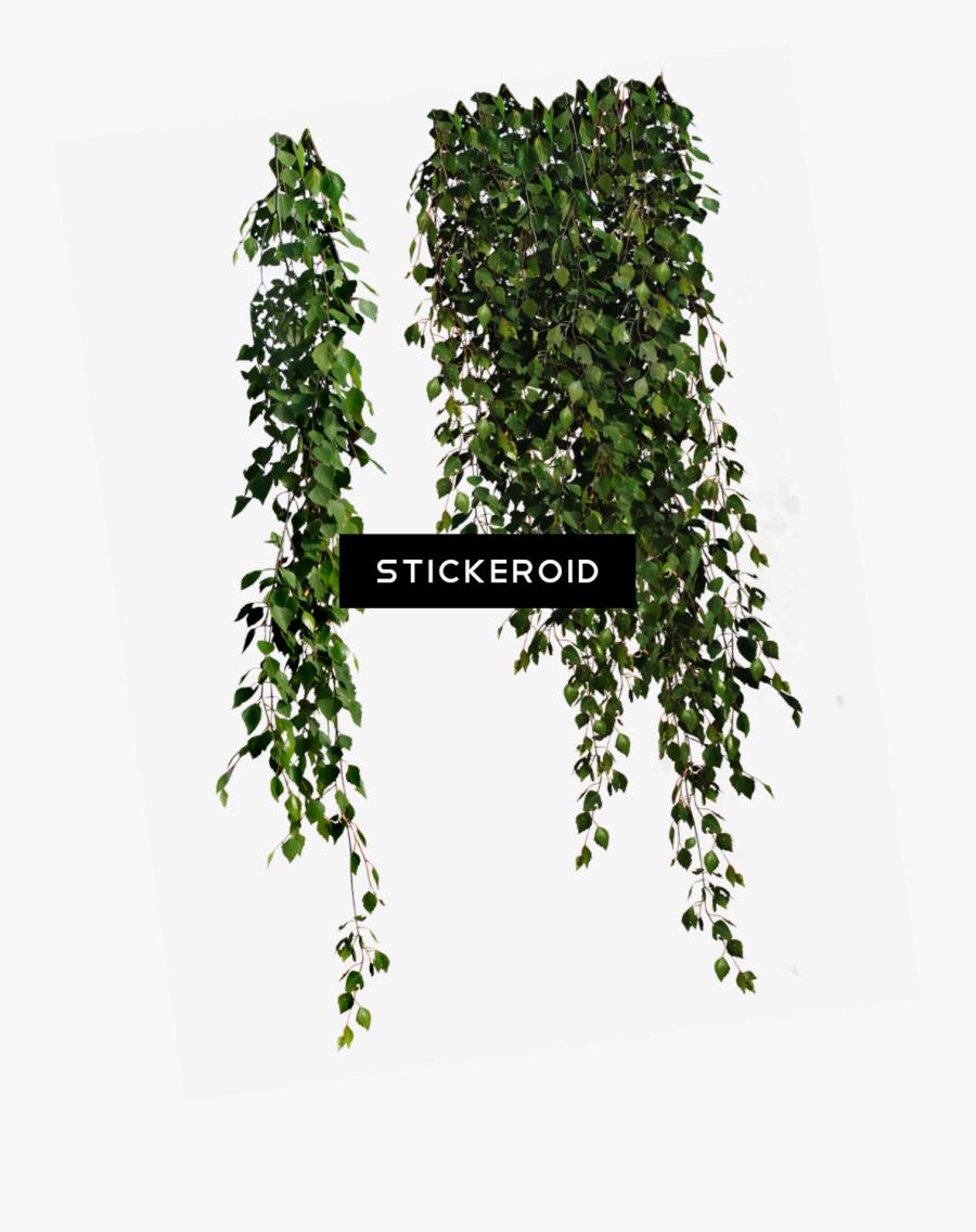 Bush Plant Png - Plants Transparent, Transparent Clipart
