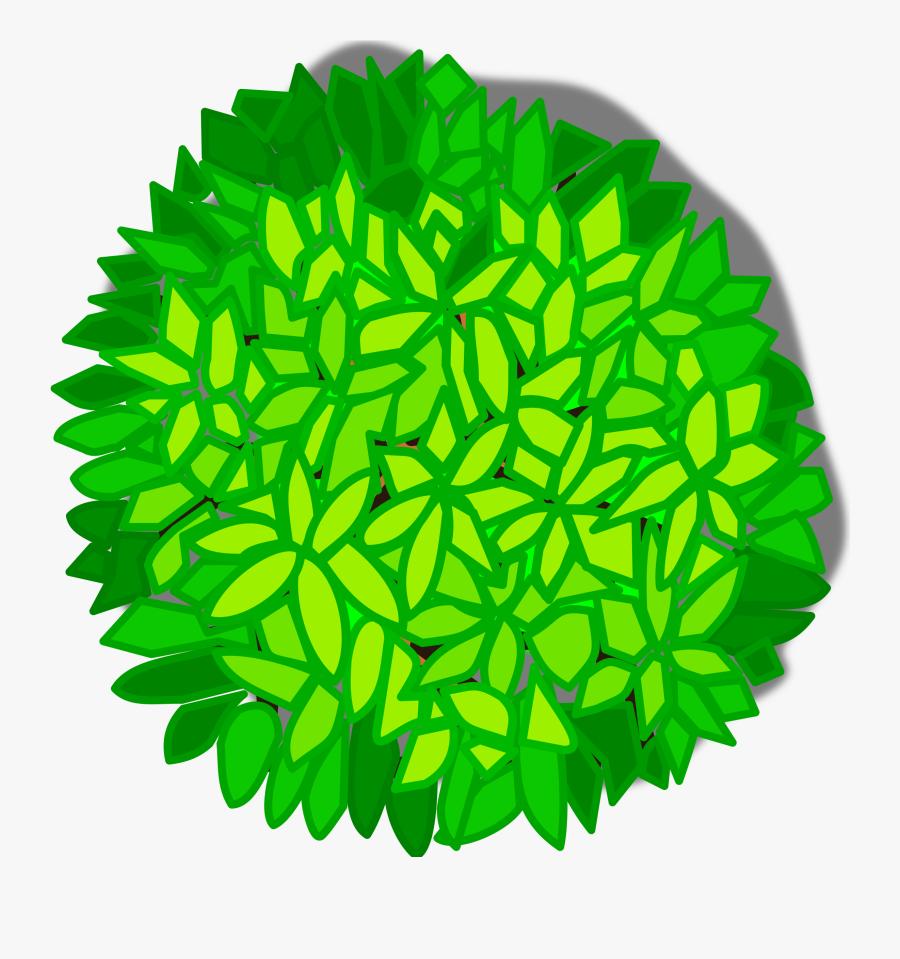 Christmas Tree Shrub Drawing Plants Cc0 - Tree Top View Clipart, Transparent Clipart