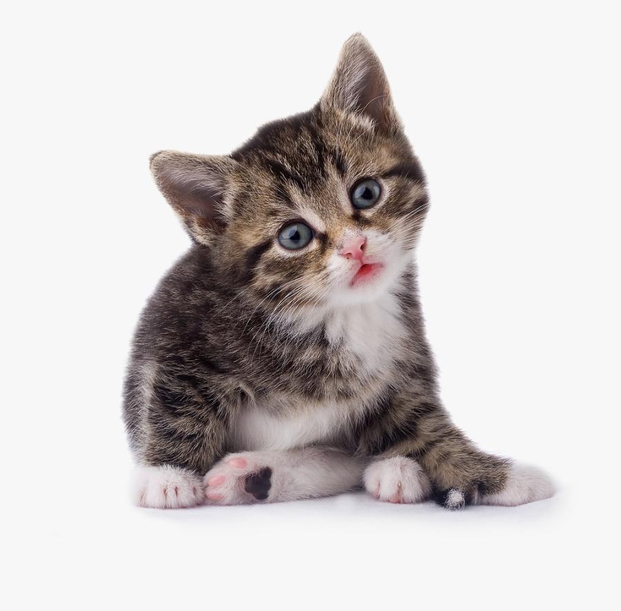 Kitten Transparent Image - Cat Png, Transparent Clipart