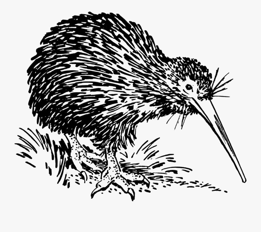 Porcupine,echidna,new World Porcupine,flightless Book,monotreme,european - Outline Of Kiwi Bird, Transparent Clipart