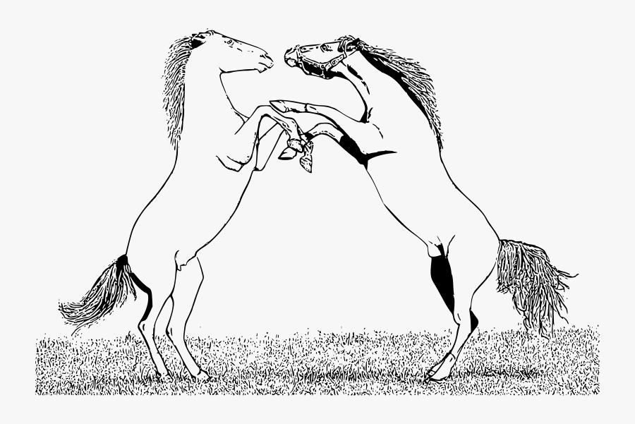 Stallions Fighting Bucking Horse