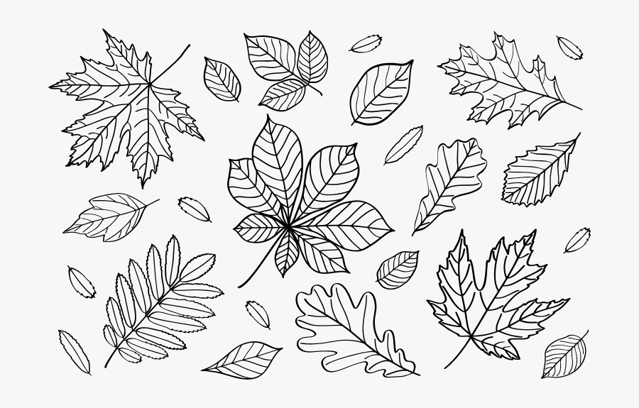 Autumn Leaves Outlines - Falling Leaves Outline Png, Transparent Clipart