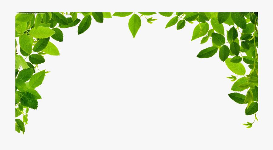 Transparent Eucalyptus Clipart - Jungle Border Png, Transparent Clipart