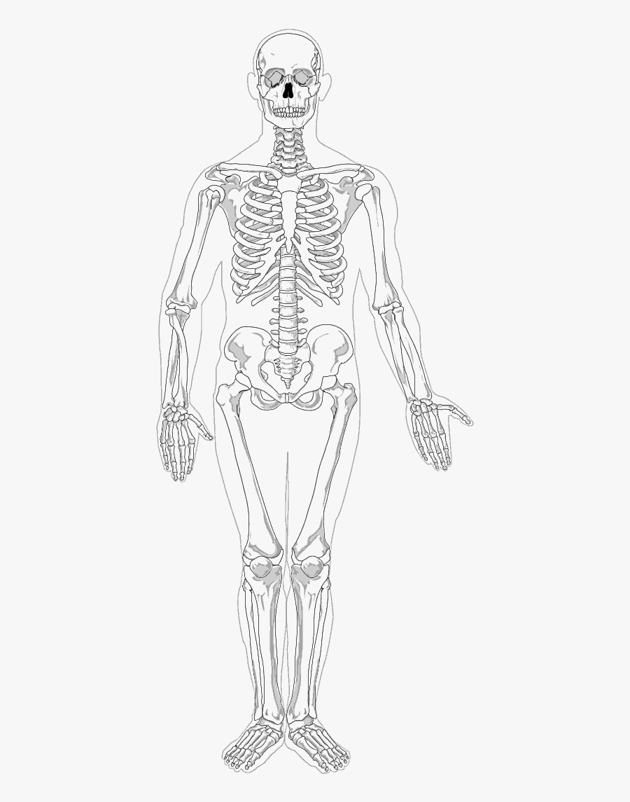 Human Full Page Bw - Full Body Skeleton Drawing, Transparent Clipart