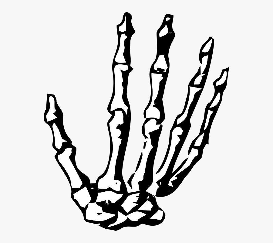 Skeleton Hand Png - Skeleton Hand Clipart, Transparent Clipart