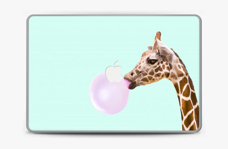 "Giraffe With A Chewing Gum Skin Macbook Pro 15"" - Giraffe Blowing Bubble Gum, Transparent Clipart"