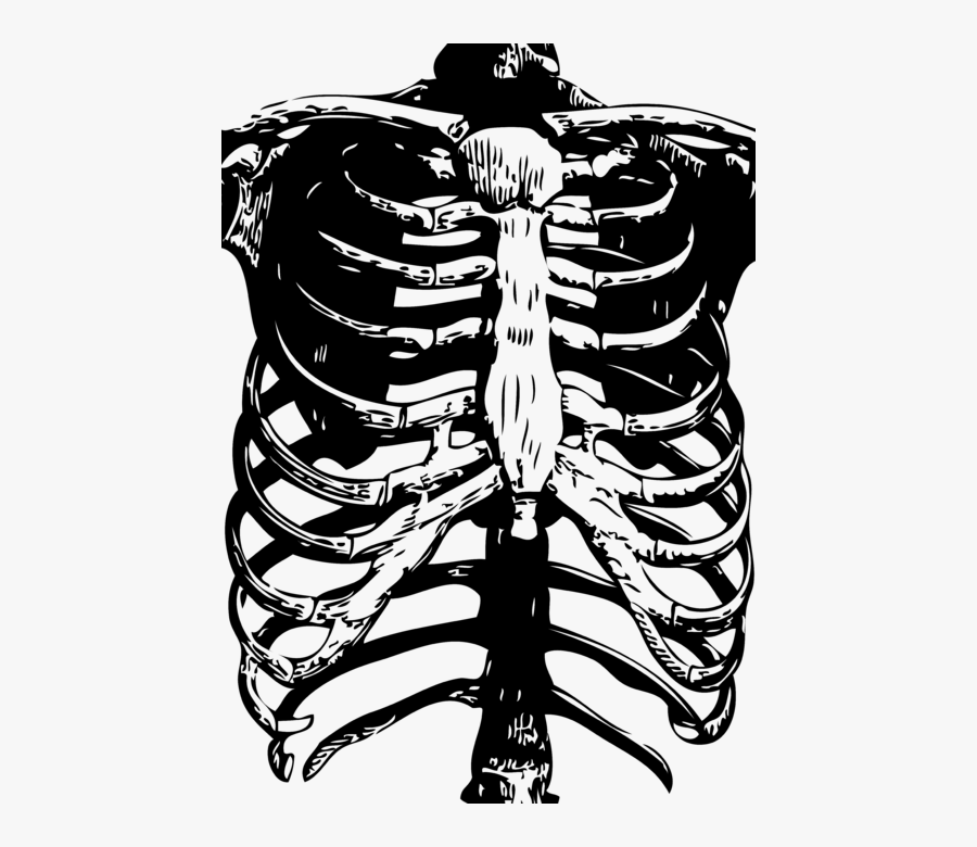 Human Lungs And Ribs Drawing, Transparent Clipart