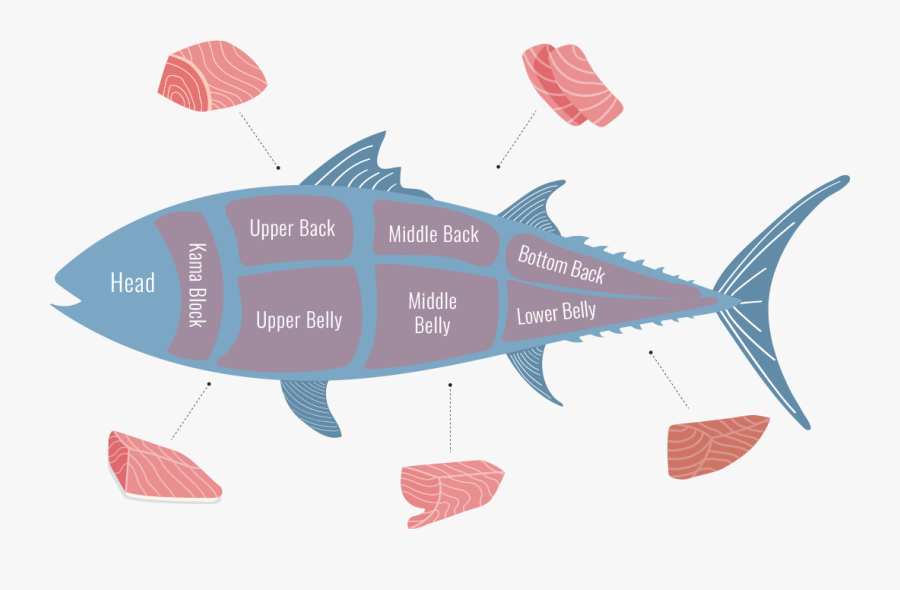 Tuna Cuts Types Of Tuna Cuts Free Transparent Clipart Clipartkey