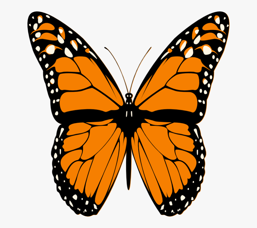 Butterfly Clip Art - Monarch Butterfly Drawing, Transparent Clipart