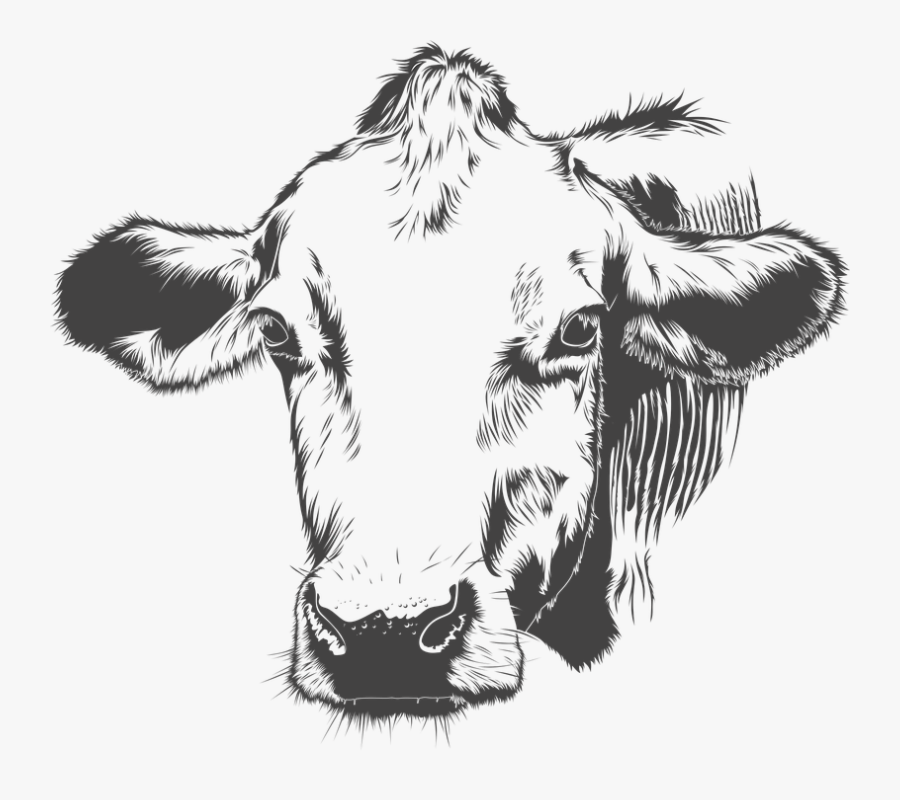 Cow, Cattle, Animal, Farm, Vector - Black And White Cow Vector, Transparent Clipart