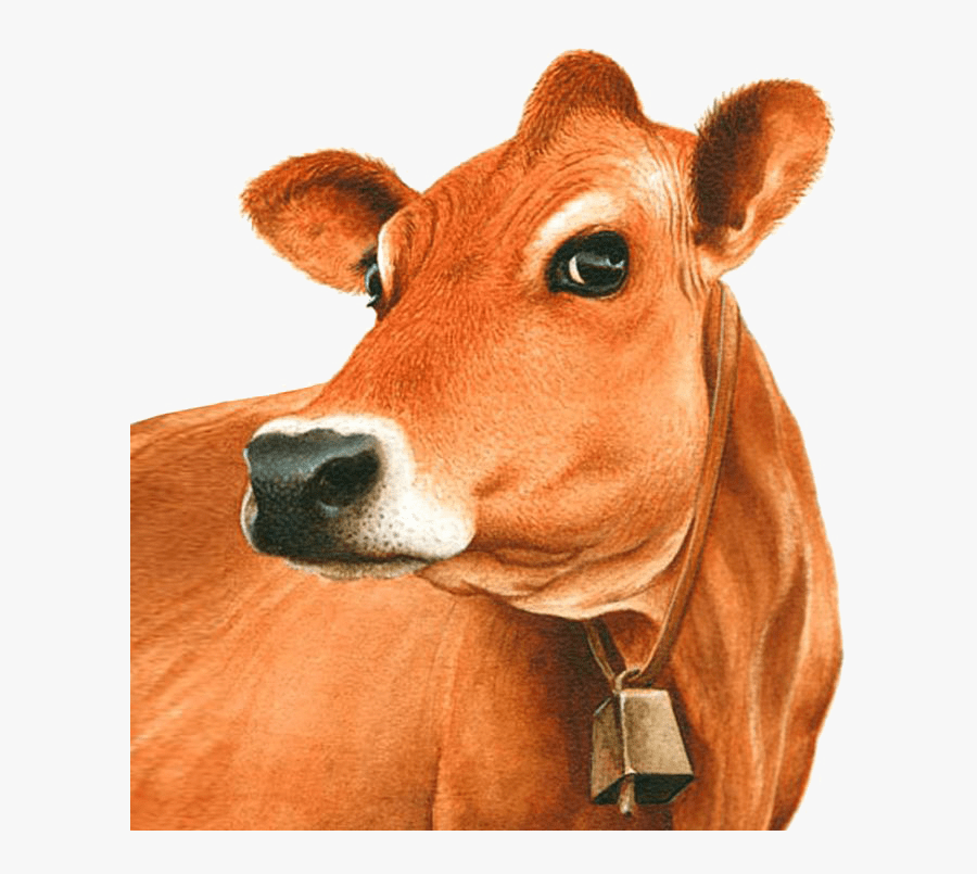Exotic Breeds Of - Jersey Cow Clipart, Transparent Clipart